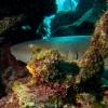 img_3711_nurse-shark