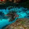 img_3951_lionfish