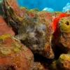img_4083_frogfish