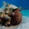 img_4290_giant-hermit-crab