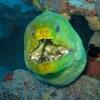 img_4536_green-moray-eel