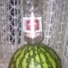 Vodka Meloen