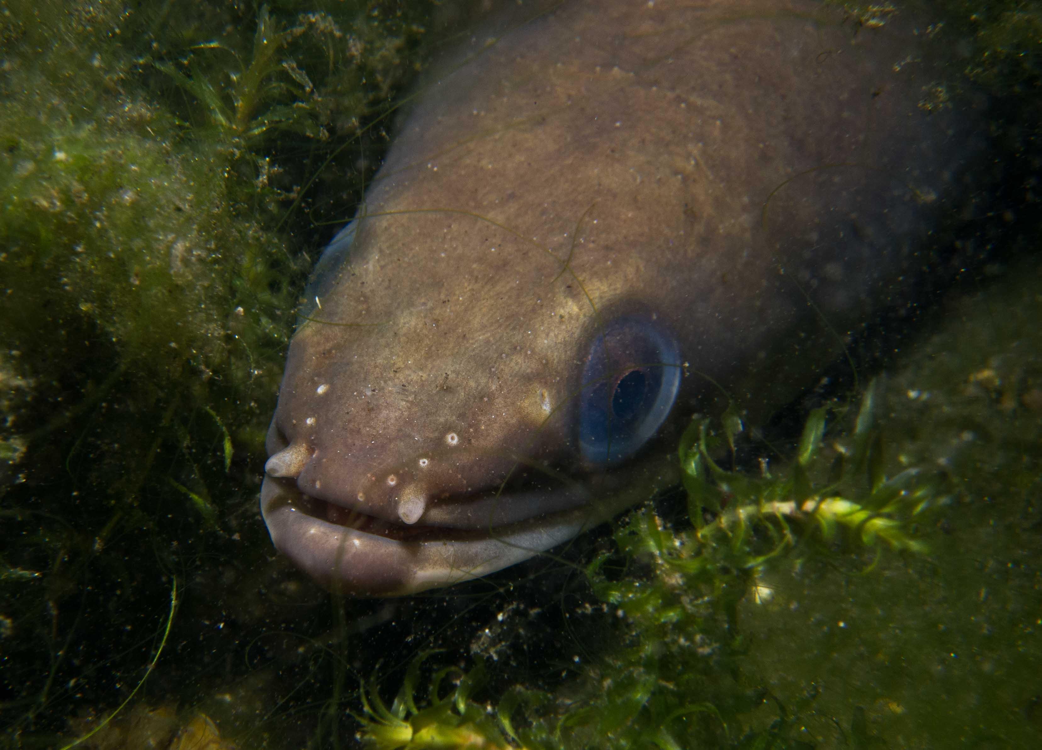 Eerste palingreservaat Europa