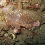 Bali onderwater