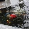 Duiker gaat onder het ijs
