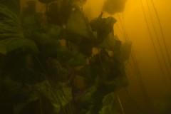 Onderwater natuurpark Zegersloot 06-08-2017