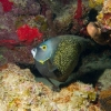 img_1755_french-angelfish