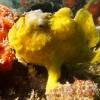 img_2117_frogfish