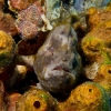 img_3764_frogfish