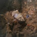 Sea Life Evert